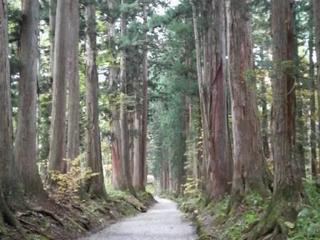 戸隠神社 奥社 杉並木 戸隠.jpg